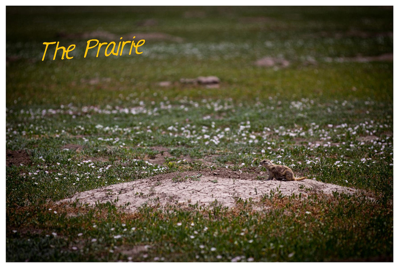 The Prairie in the Badlands by Laine Torres Photography